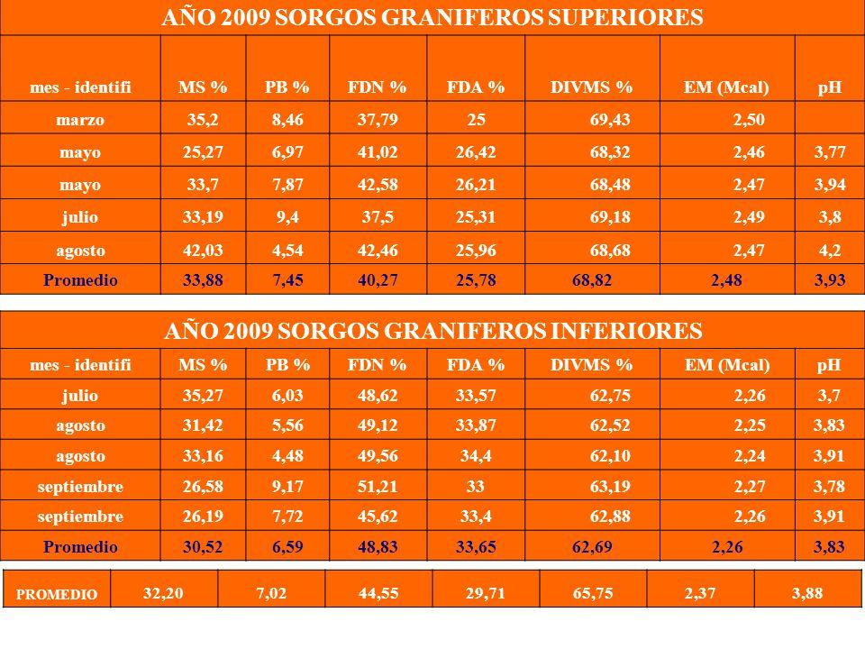 AÑO 2009 SORGOS GRANIFEROS SUPERIORES