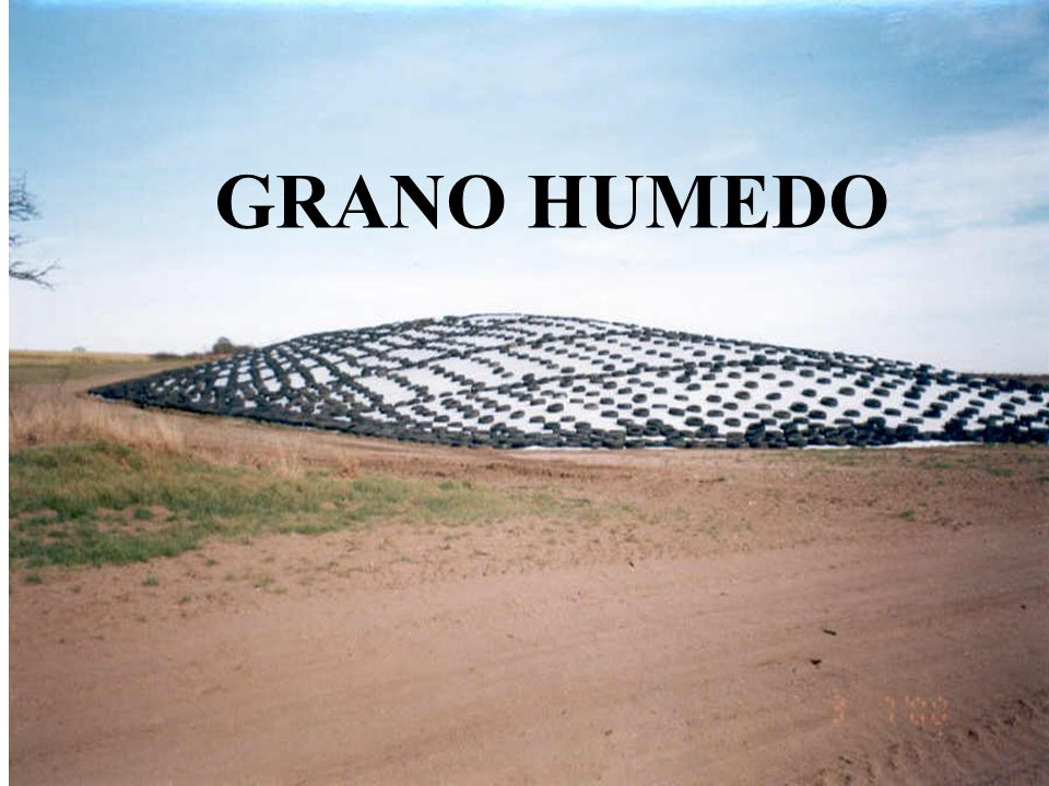 GRANO HUMEDO