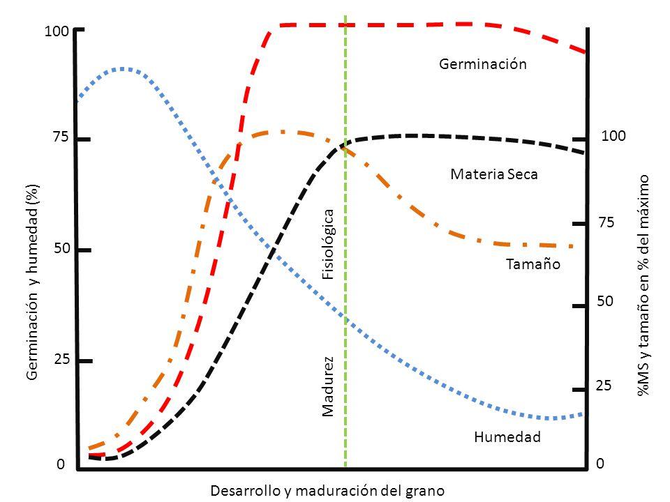 100 Germinación. 75. 100. Materia Seca. 75. Germinación y humedad (%) 50. %MS y tamaño en % del máximo.