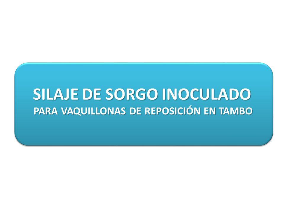 SILAJE DE SORGO INOCULADO PARA VAQUILLONAS DE REPOSICIÓN EN TAMBO