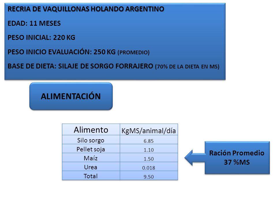 Alimento ALIMENTACIÓN RECRIA DE VAQUILLONAS HOLANDO ARGENTINO