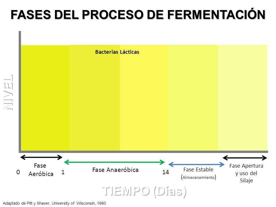FASES DEL PROCESO DE FERMENTACIÓN