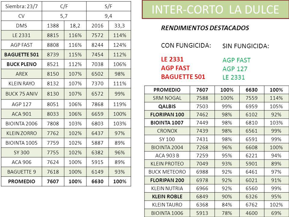 INTER-CORTO LA DULCE RENDIMIENTOS DESTACADOS CON FUNGICIDA: LE 2331