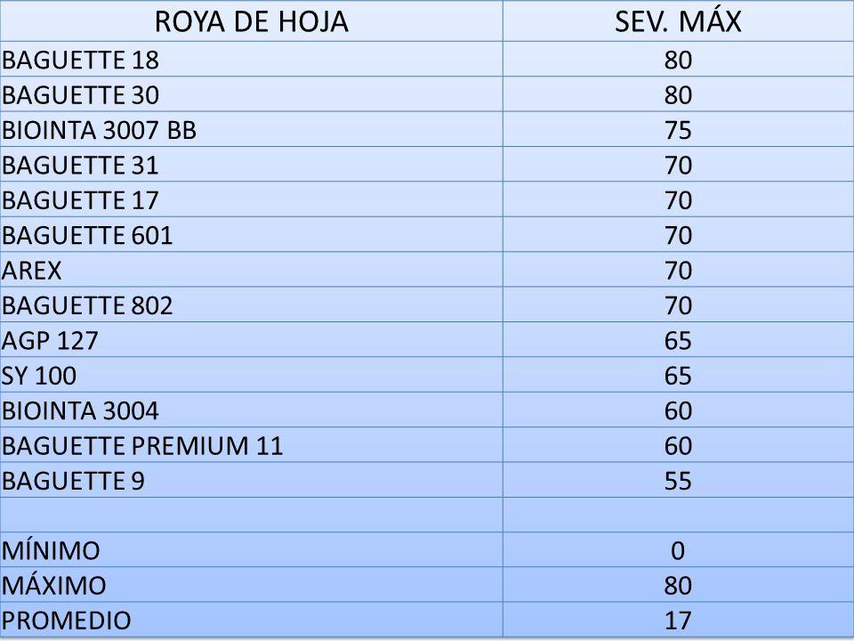 ROYA DE HOJA SEV. MÁX BAGUETTE 18 80 BAGUETTE 30 BIOINTA 3007 BB 75
