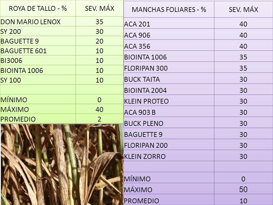 ROYA DE TALLO - % SEV. MÁX. DON MARIO LENOX. 35. SY 200. 30. BAGUETTE 9. 20. BAGUETTE 601. 10.