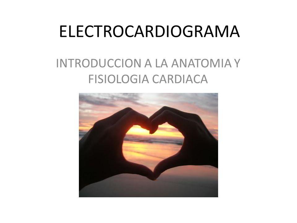 INTRODUCCION A LA ANATOMIA Y FISIOLOGIA CARDIACA