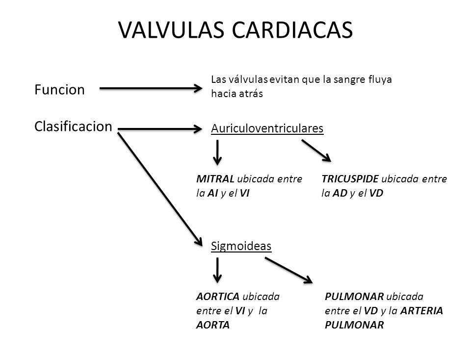VALVULAS CARDIACAS Funcion Clasificacion Auriculoventriculares