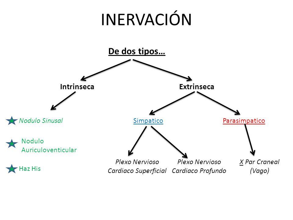 INERVACIÓN De dos tipos… Intrinseca Extrinseca Nodulo Sinusal