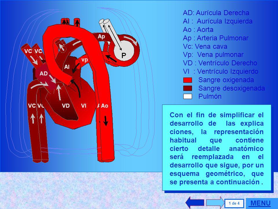 . AD: Aurícula Derecha AI : Aurícula Izquierda Ao : Aorta