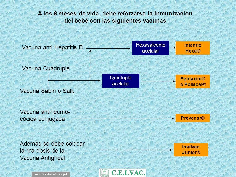 A los 6 meses de vida, debe reforzarse la inmunización