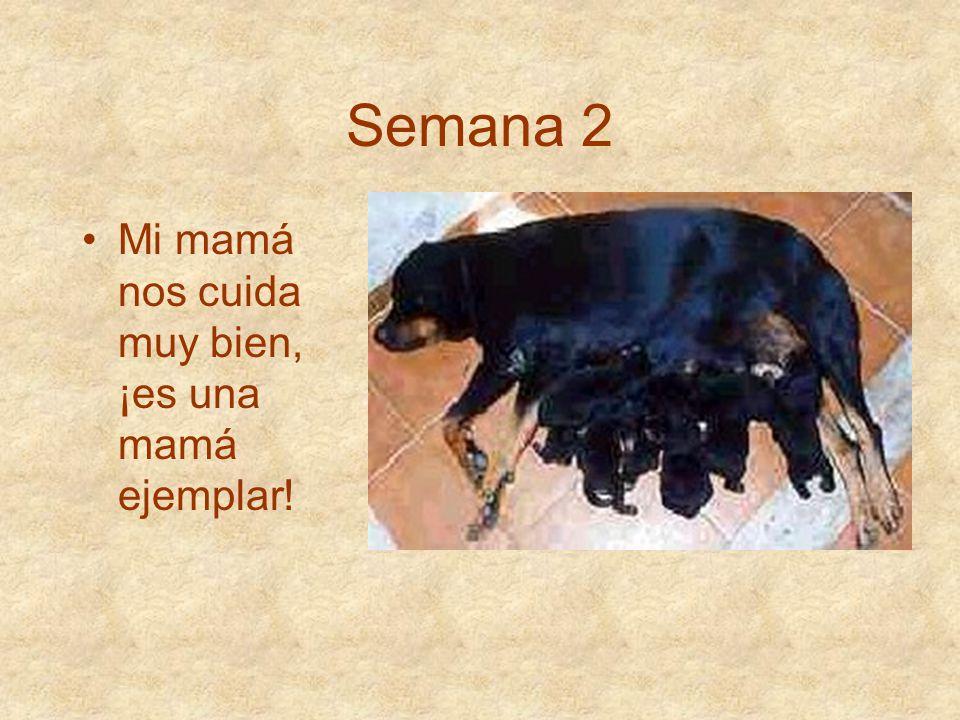Semana 2 Mi mamá nos cuida muy bien, ¡es una mamá ejemplar!