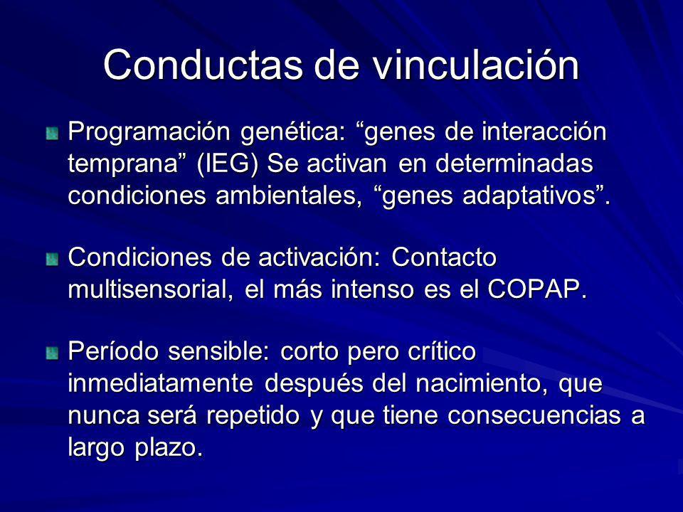 Conductas de vinculación