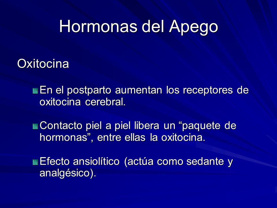 Hormonas del Apego Oxitocina