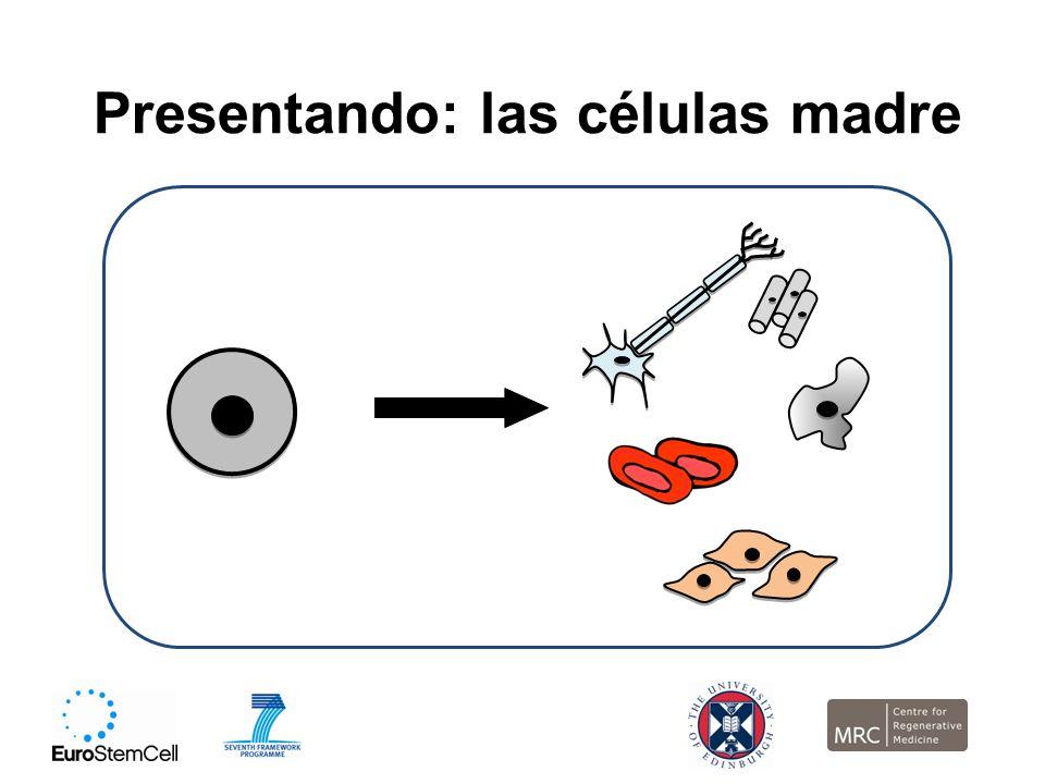 Presentando: las células madre