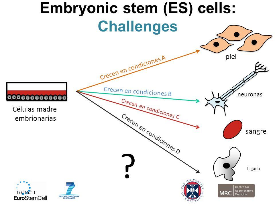 Embryonic stem (ES) cells: