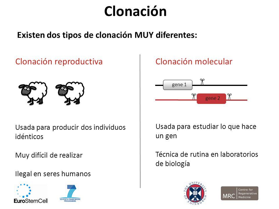 Clonación Existen dos tipos de clonación MUY diferentes: