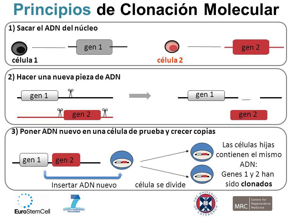Principios de Clonación Molecular