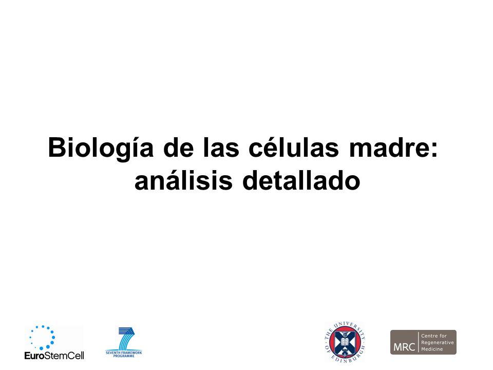 Biología de las células madre: