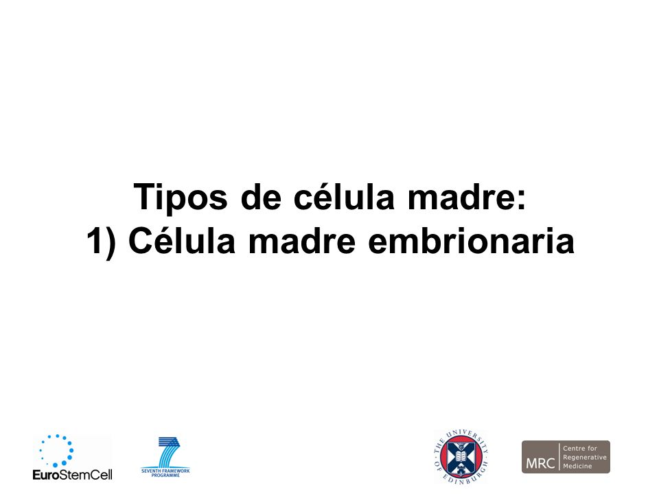 1) Célula madre embrionaria