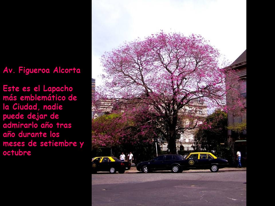 Av. Figueroa Alcorta