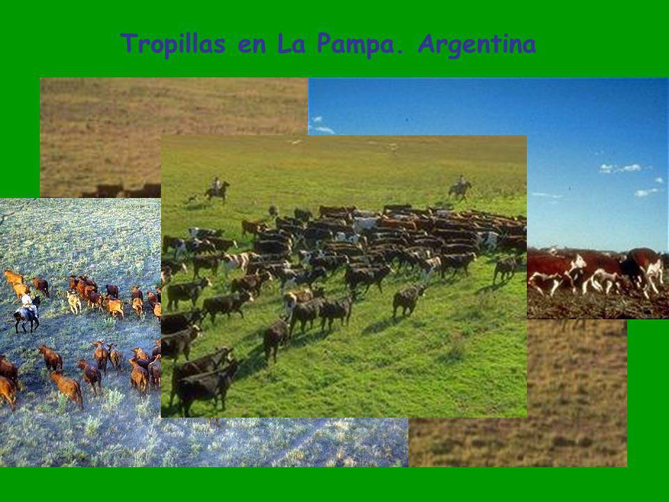 Tropillas en La Pampa. Argentina