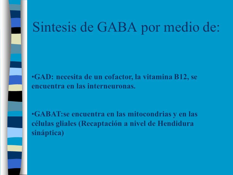 Sintesis de GABA por medio de:
