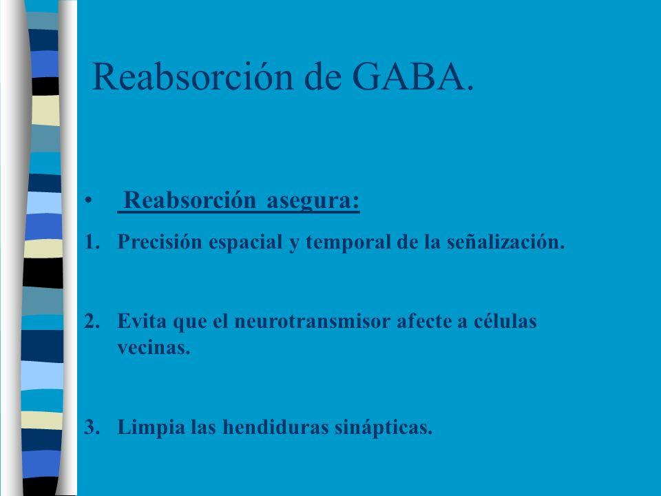 Reabsorción de GABA. Reabsorción asegura: