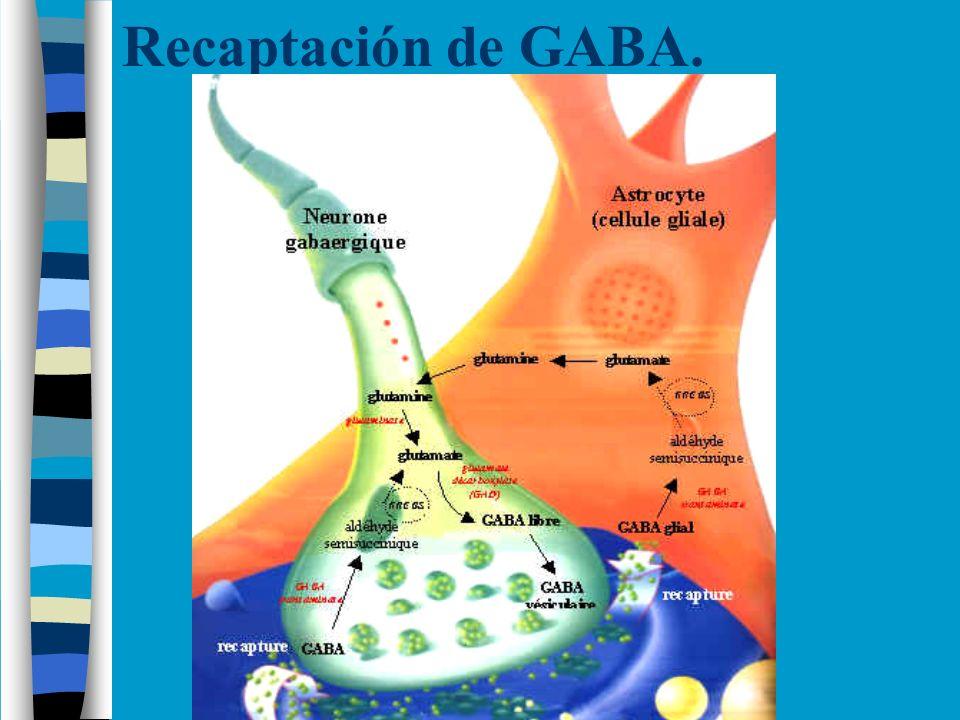 Recaptación de GABA.