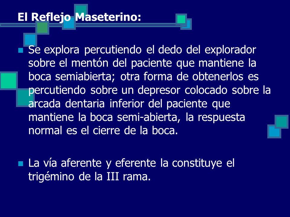 El Reflejo Maseterino: