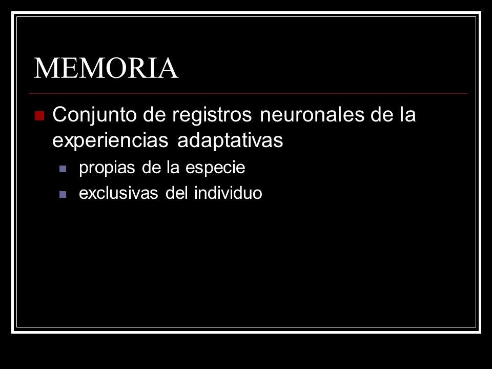MEMORIA Conjunto de registros neuronales de la experiencias adaptativas.