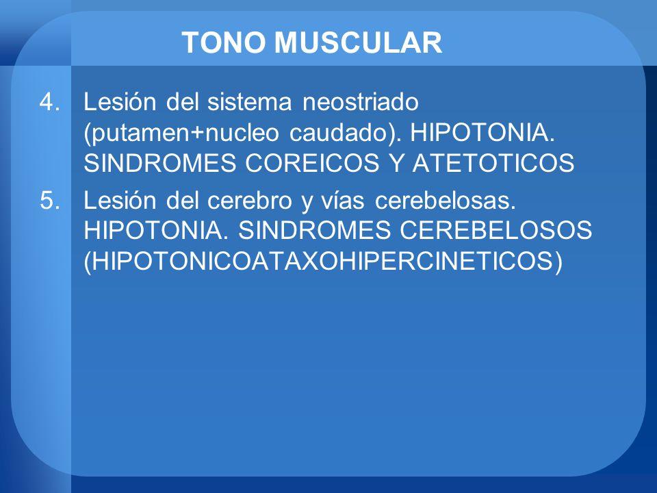 TONO MUSCULARLesión del sistema neostriado (putamen+nucleo caudado). HIPOTONIA. SINDROMES COREICOS Y ATETOTICOS.
