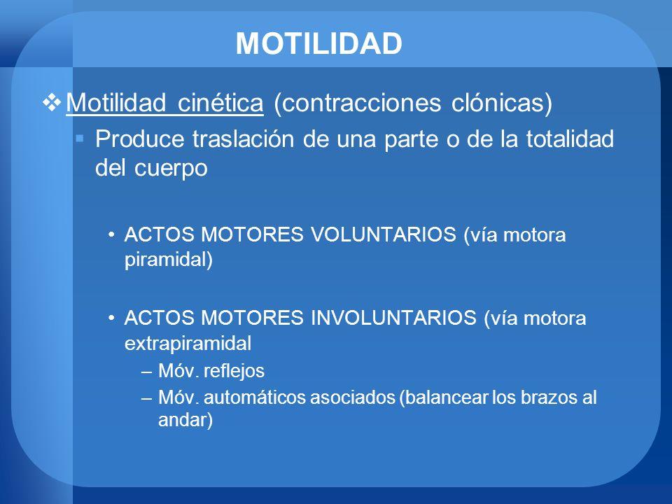 MOTILIDAD Motilidad cinética (contracciones clónicas)