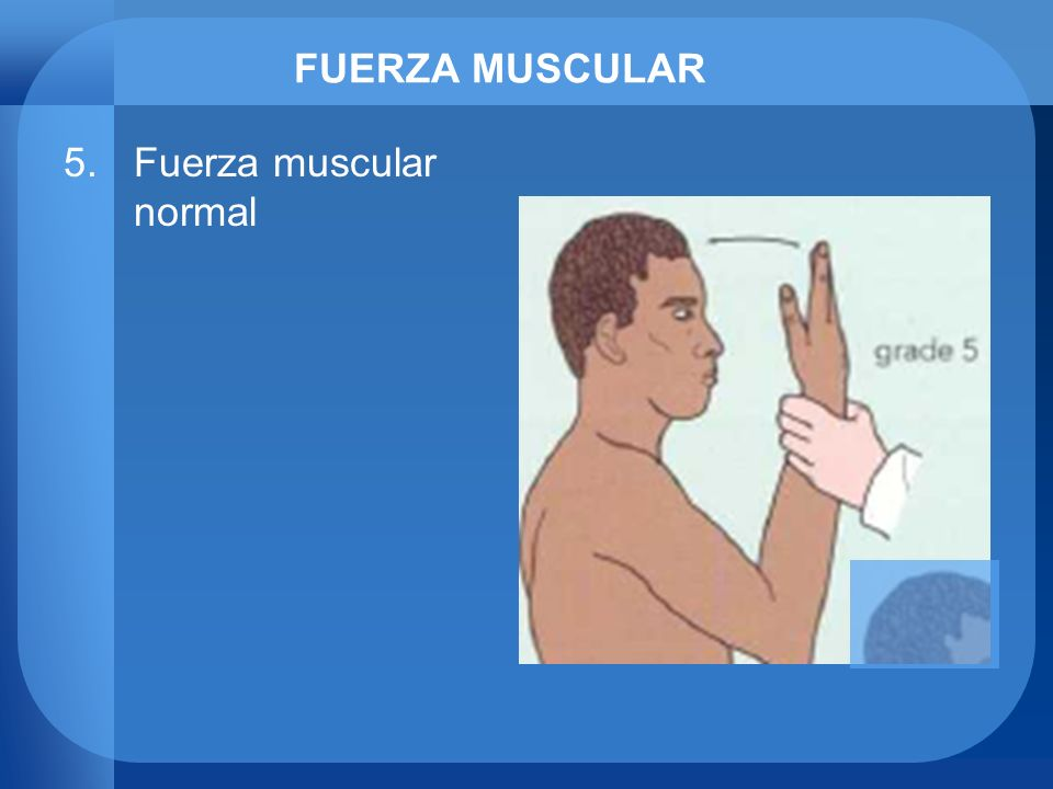 FUERZA MUSCULAR Fuerza muscular normal
