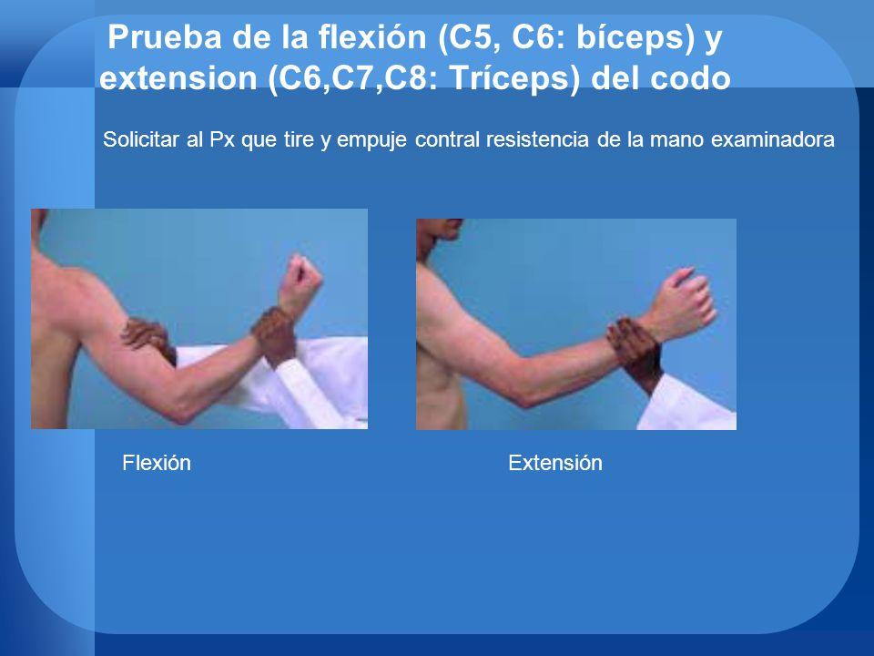 Prueba de la flexión (C5, C6: bíceps) y extension (C6,C7,C8: Tríceps) del codo