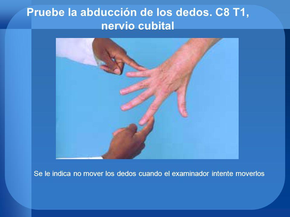 Pruebe la abducción de los dedos. C8 T1, nervio cubital