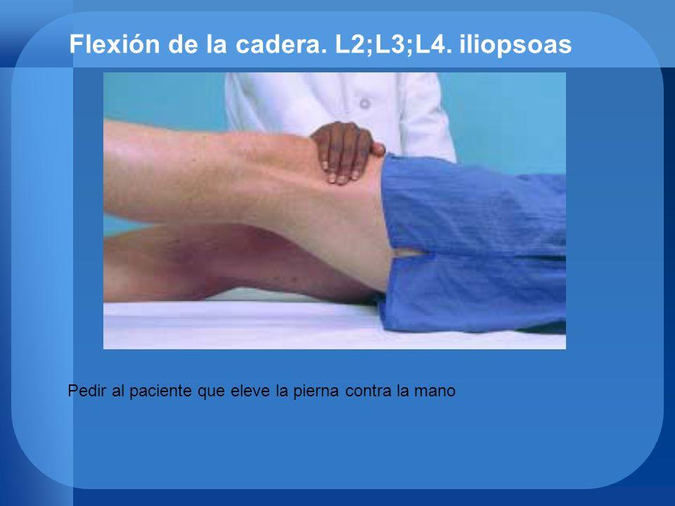 Flexión de la cadera. L2;L3;L4. iliopsoas
