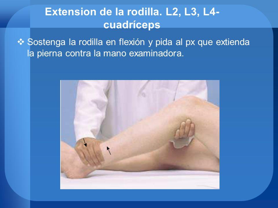 Extension de la rodilla. L2, L3, L4- cuadríceps