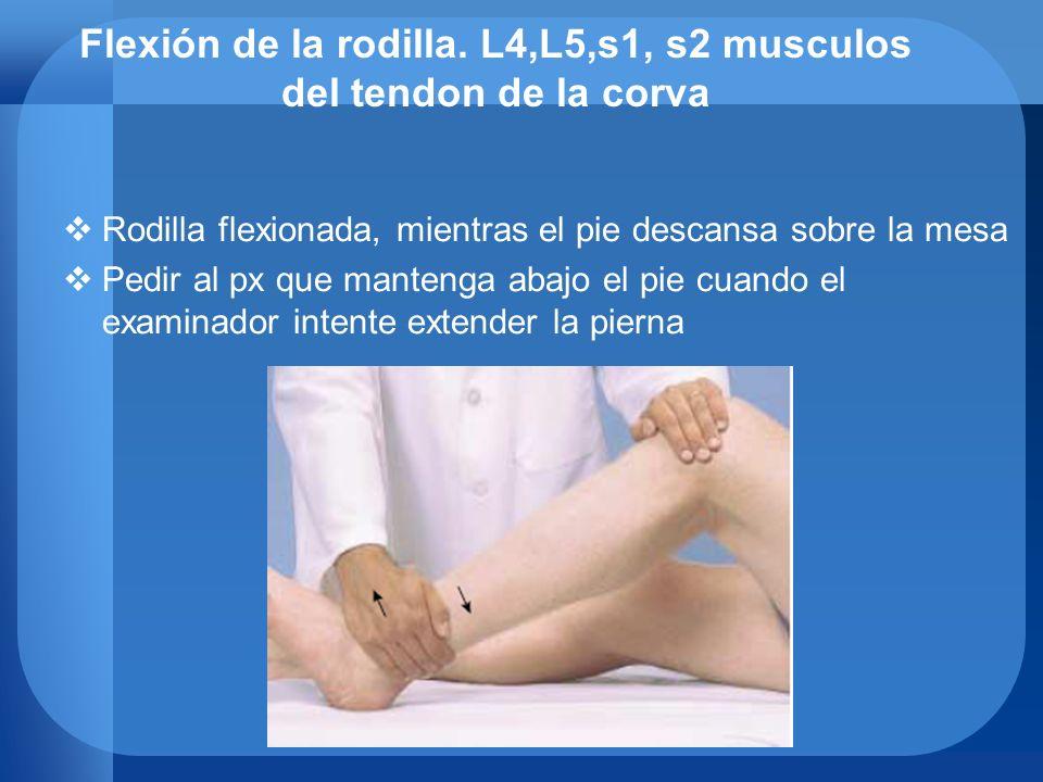 Flexión de la rodilla. L4,L5,s1, s2 musculos del tendon de la corva