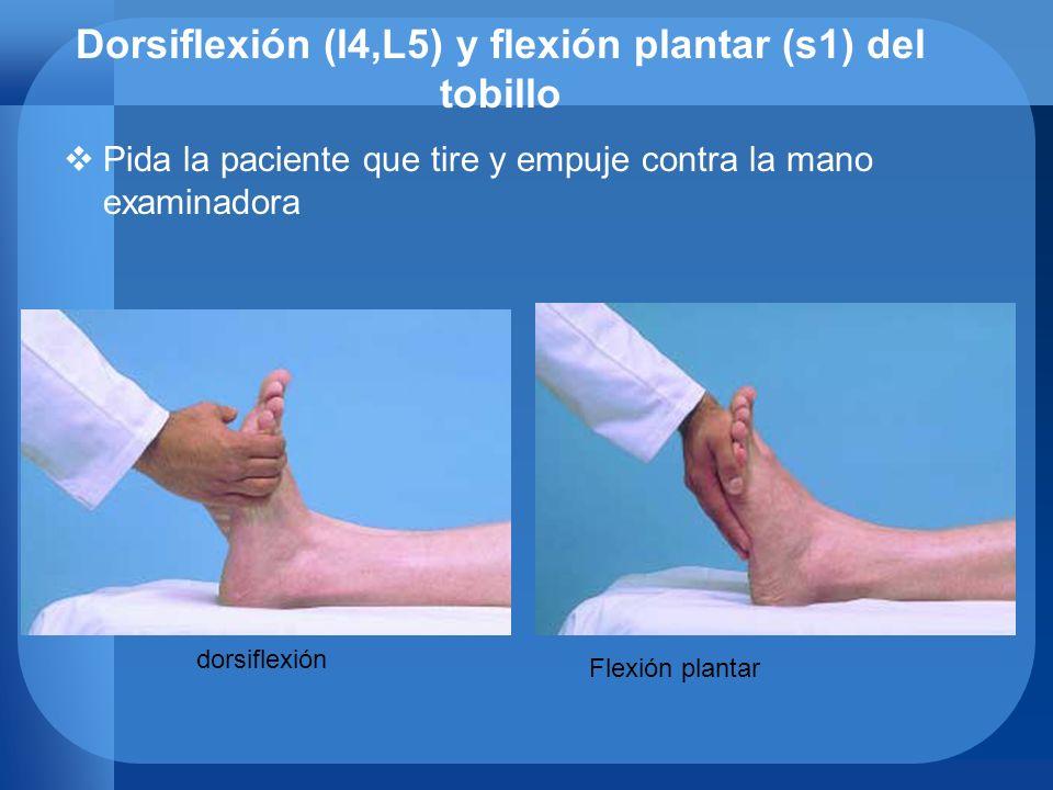 Dorsiflexión (l4,L5) y flexión plantar (s1) del tobillo