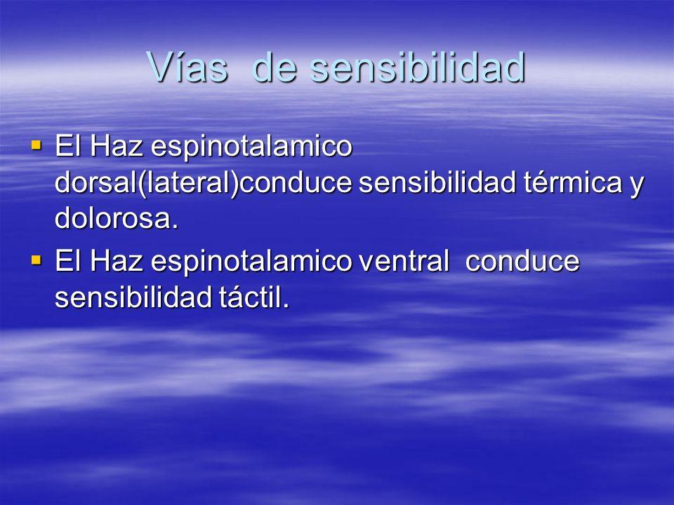 Vías de sensibilidadEl Haz espinotalamico dorsal(lateral)conduce sensibilidad térmica y dolorosa.