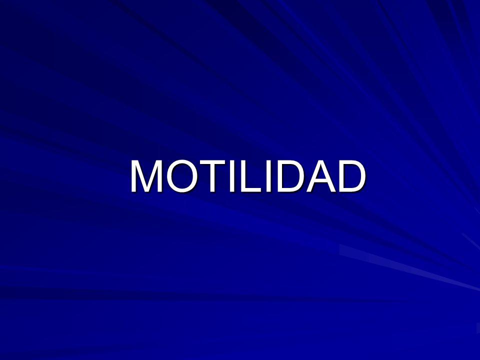 MOTILIDAD