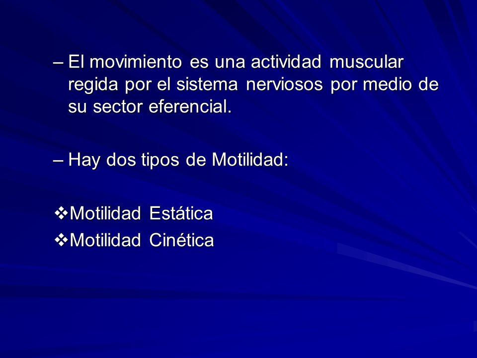 El movimiento es una actividad muscular regida por el sistema nerviosos por medio de su sector eferencial.