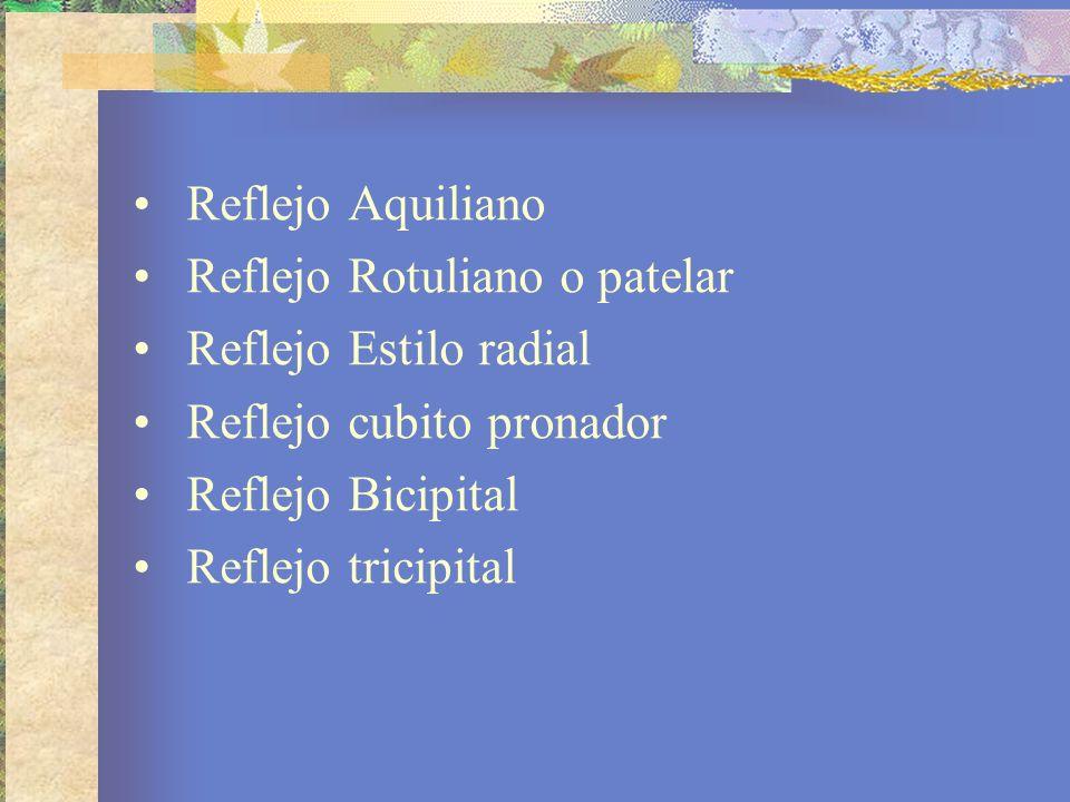 Reflejo Aquiliano Reflejo Rotuliano o patelar. Reflejo Estilo radial. Reflejo cubito pronador. Reflejo Bicipital.