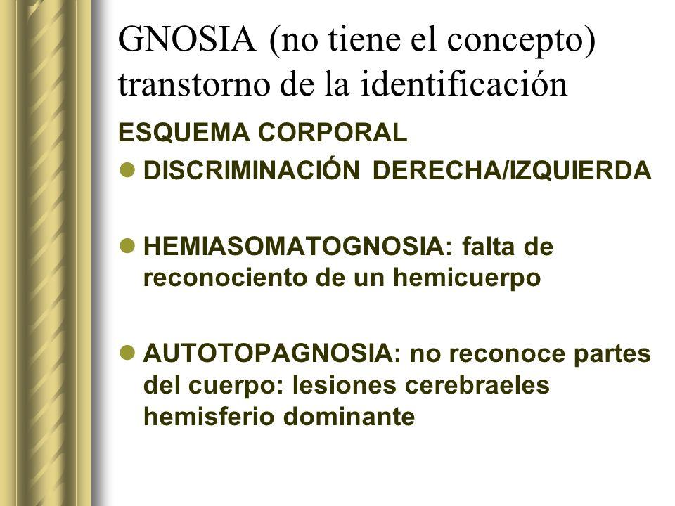 GNOSIA (no tiene el concepto) transtorno de la identificación