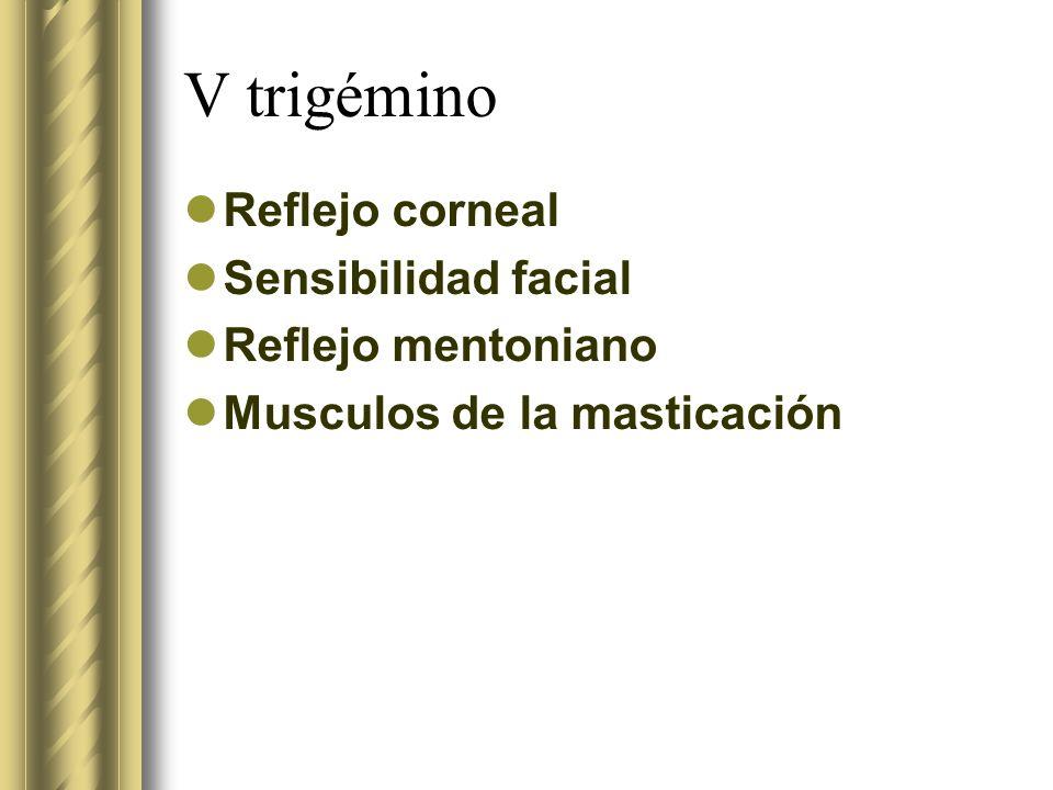 V trigémino Reflejo corneal Sensibilidad facial Reflejo mentoniano