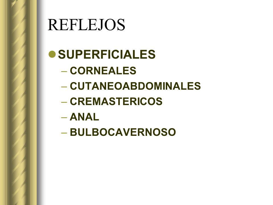 REFLEJOS SUPERFICIALES CORNEALES CUTANEOABDOMINALES CREMASTERICOS ANAL