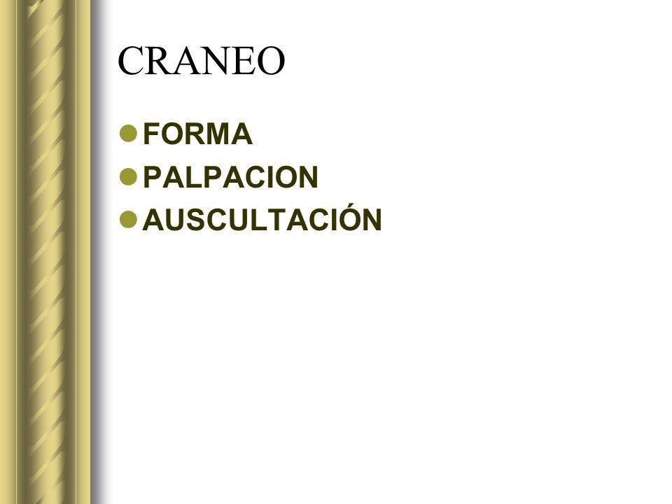 CRANEO FORMA PALPACION AUSCULTACIÓN