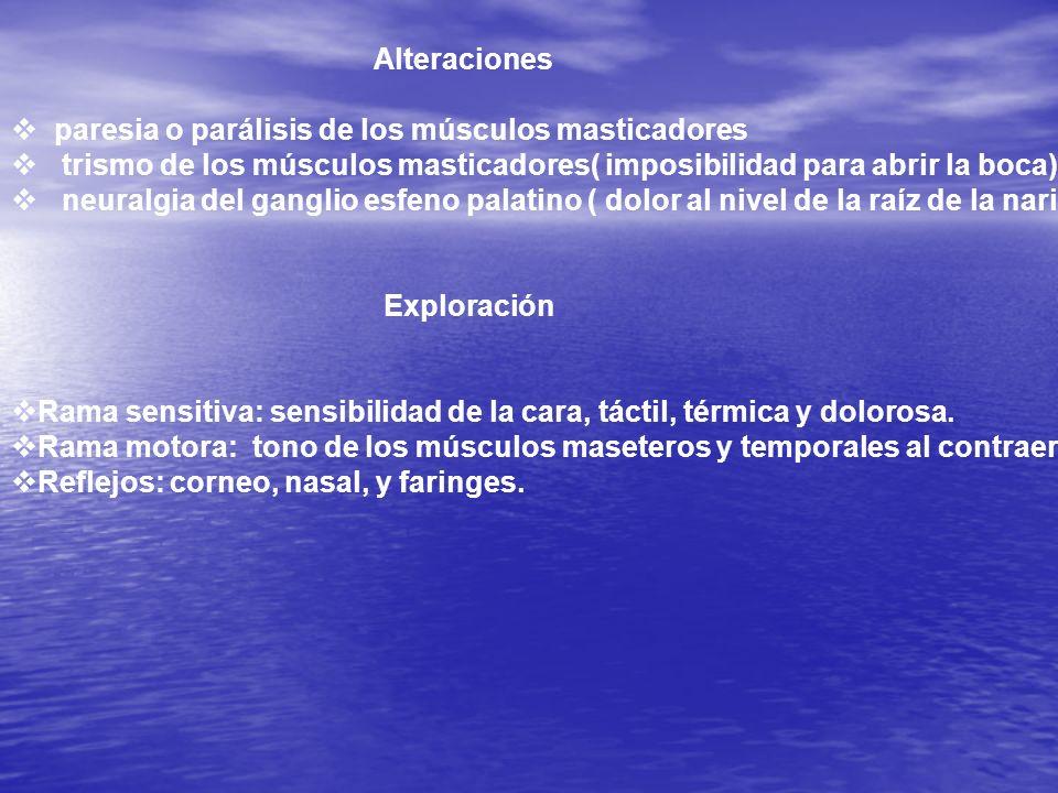 Alteracionesparesia o parálisis de los músculos masticadores. trismo de los músculos masticadores( imposibilidad para abrir la boca)