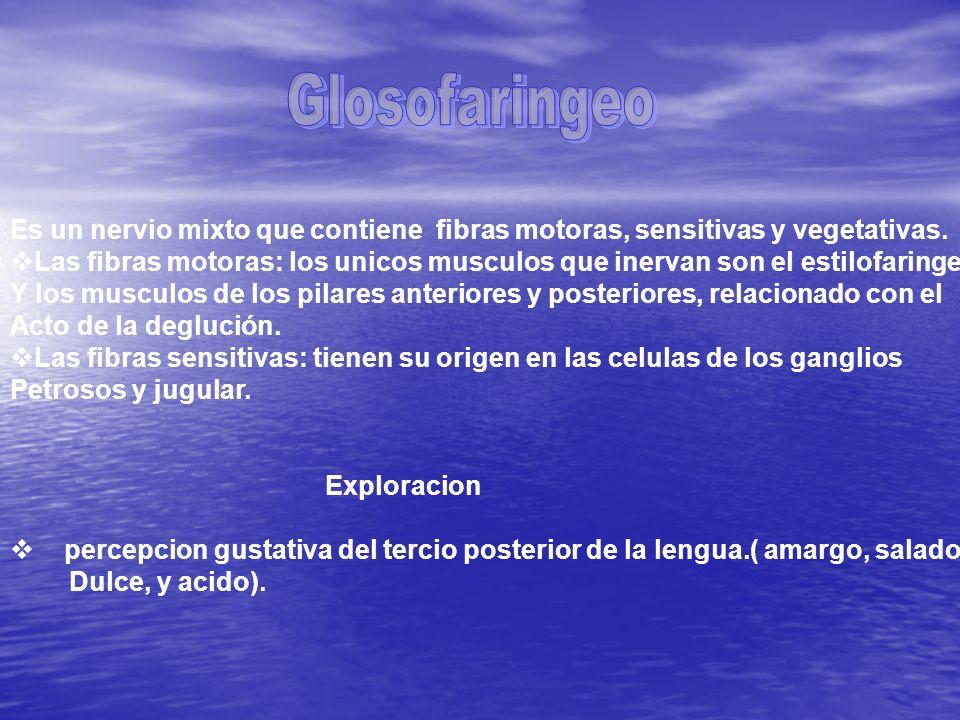 Glosofaringeo Es un nervio mixto que contiene fibras motoras, sensitivas y vegetativas.
