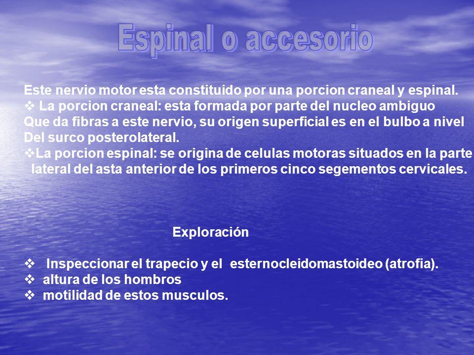 Espinal o accesorioEste nervio motor esta constituido por una porcion craneal y espinal.